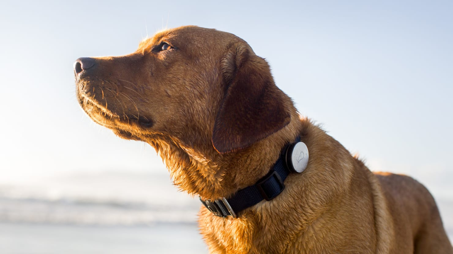fitness gadgets u2026 for your dog
