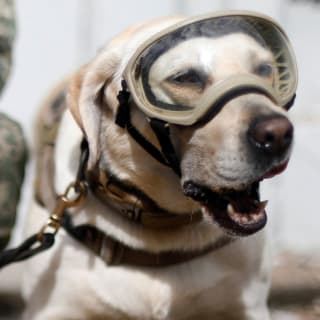Rescue Dogs Help Mexico City Dig Out After Earthquake