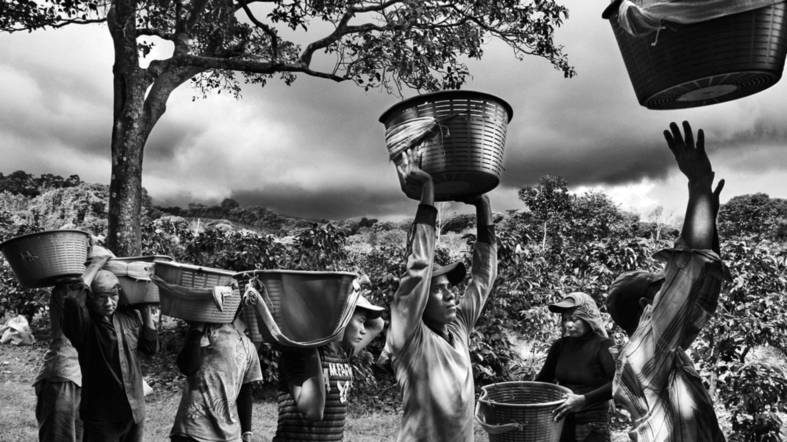 K And K Auto >> Sebastião Salgado Chronicles Coffee Plantations (PHOTOS)