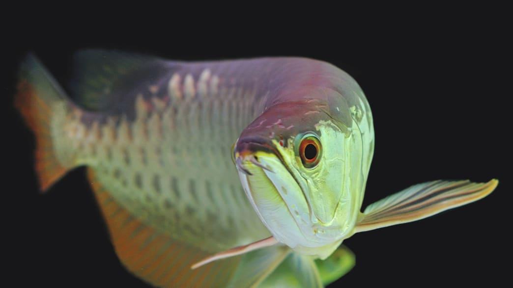 Endangered Species Laws May Endanger Species