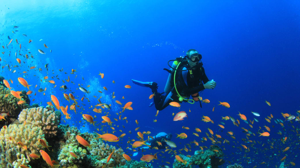 10 Best Dive Sites in North America (Photos)