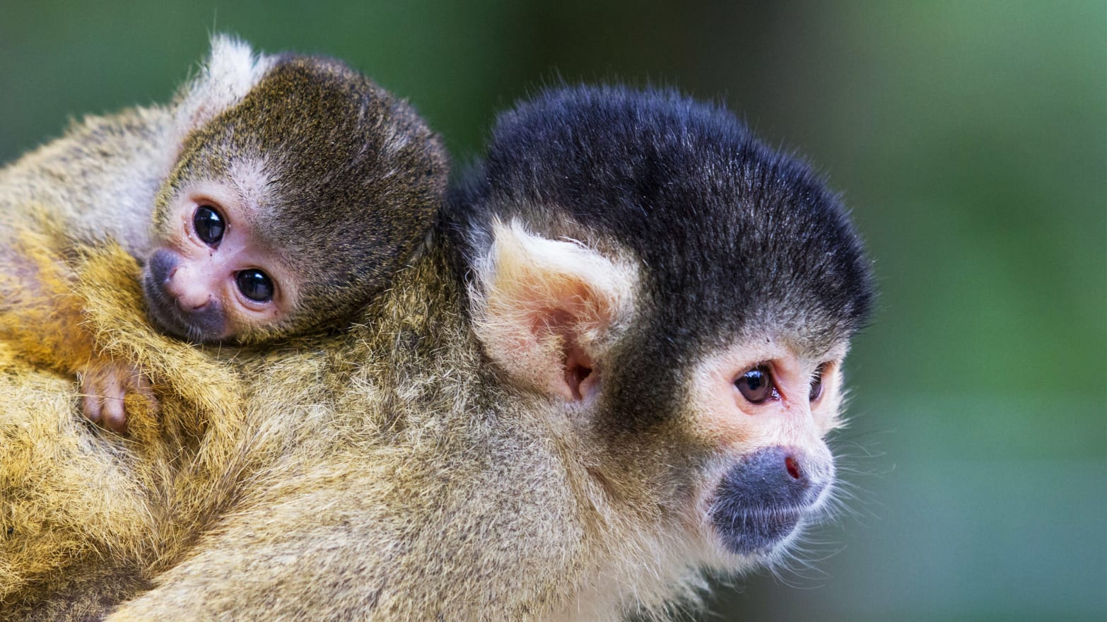 Pharma Business Starved Baby Monkeys to Death, Feds Claim