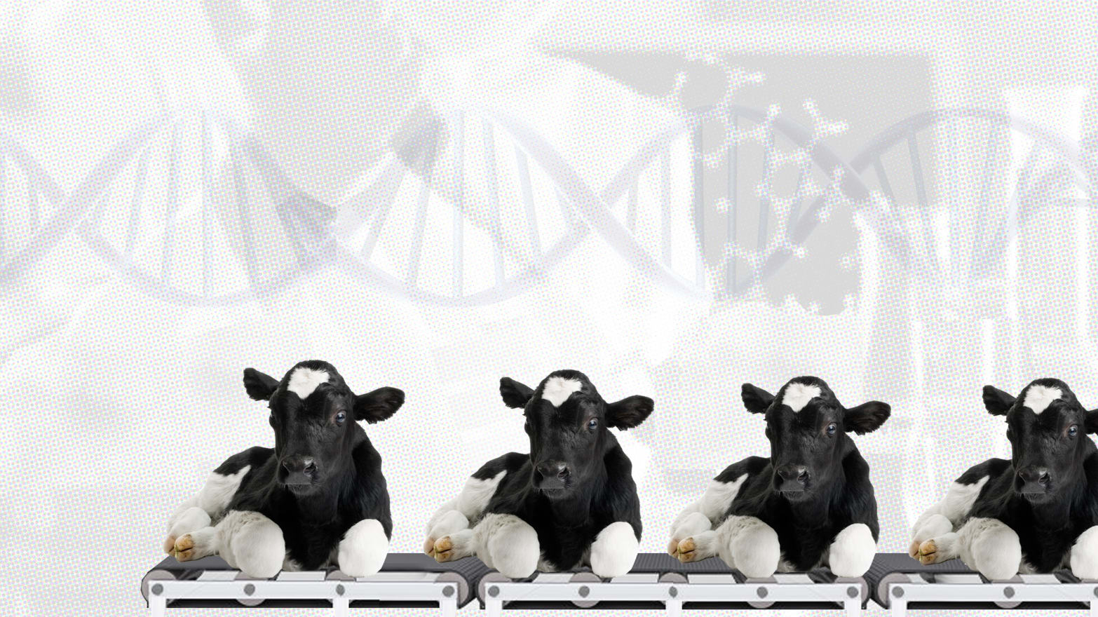 This Mad Scientist Will Clone 100,000 Cows