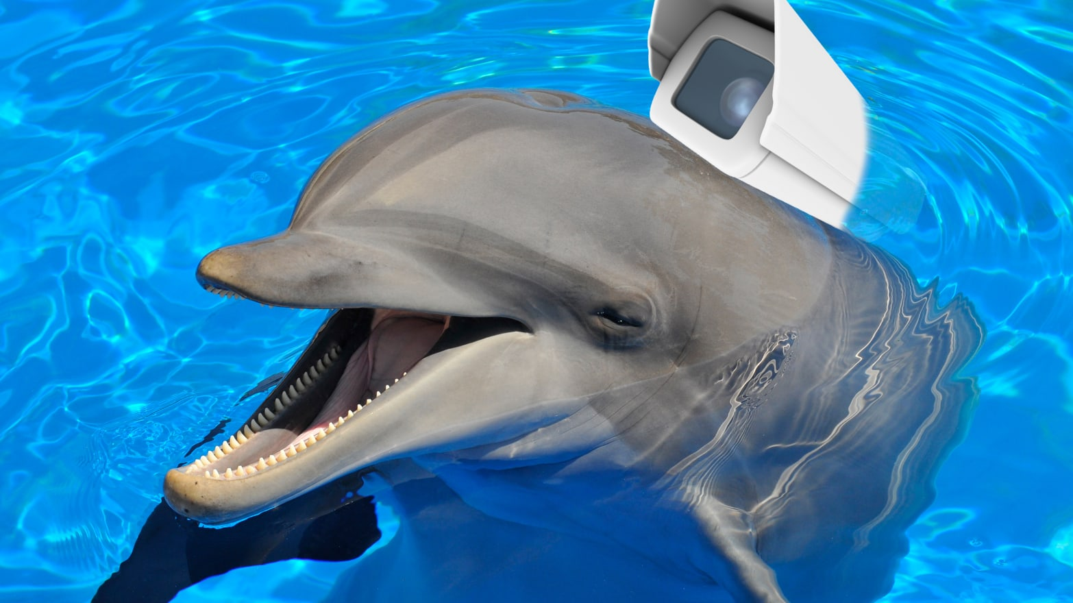 Hamas Arrests 'Israeli Spy' Dolphin