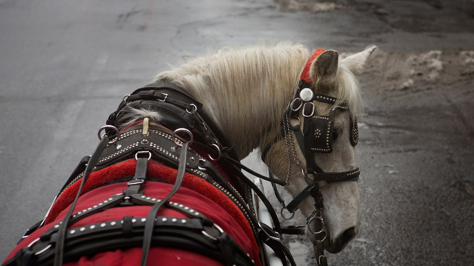 Central Park's Carriages Saved This Horse