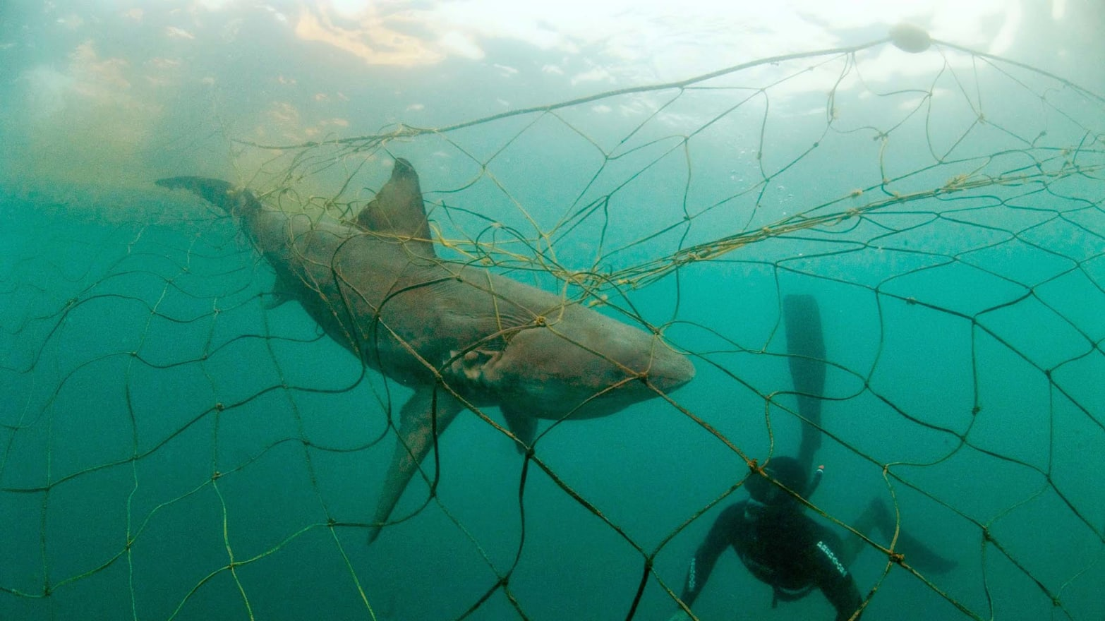 New Report Reveals U.S. Fisheries Killing Thousands of Protected and Endangered Species