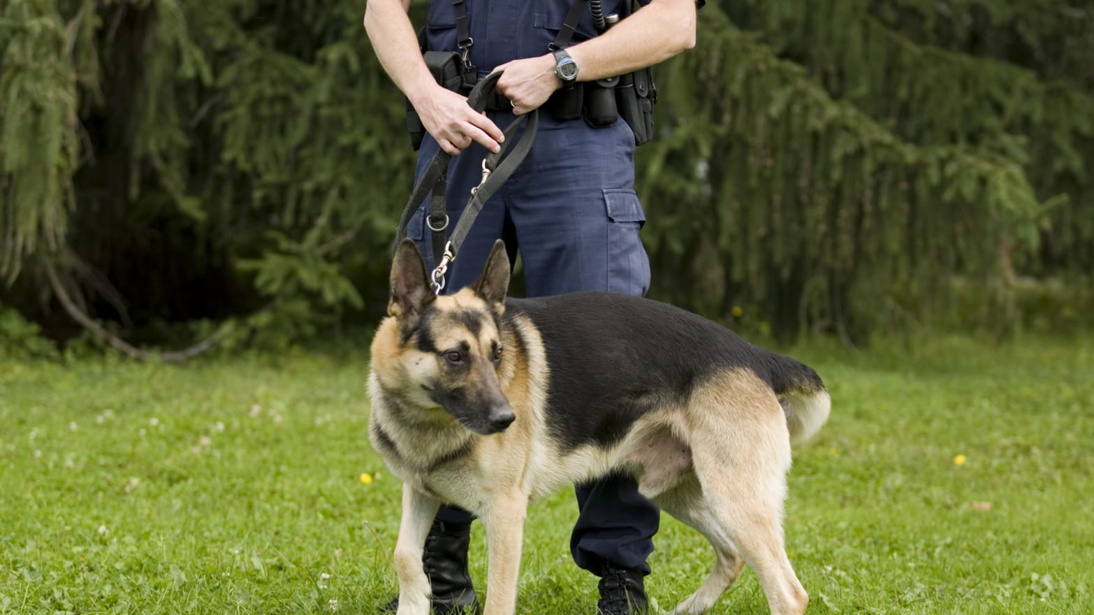 Dog Orders Cavity Search