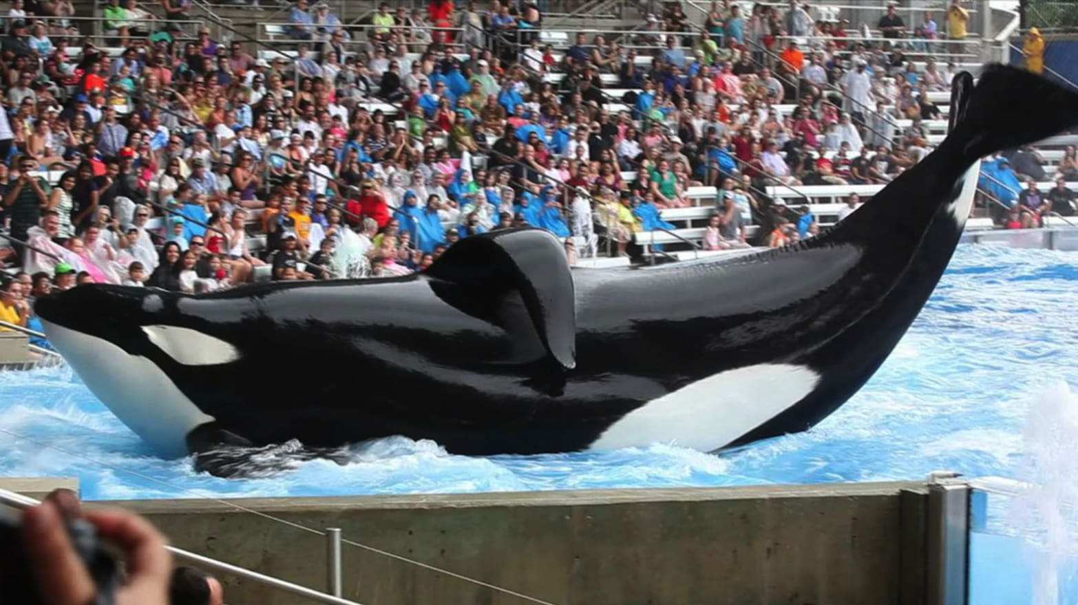 'Blackfish' Director: Killer Whales Don't Belong in Captivity