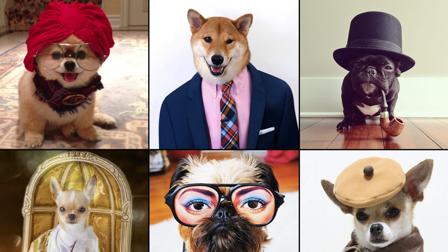 The 11 Best-Dressed Dogs of Instagram (PHOTOS)