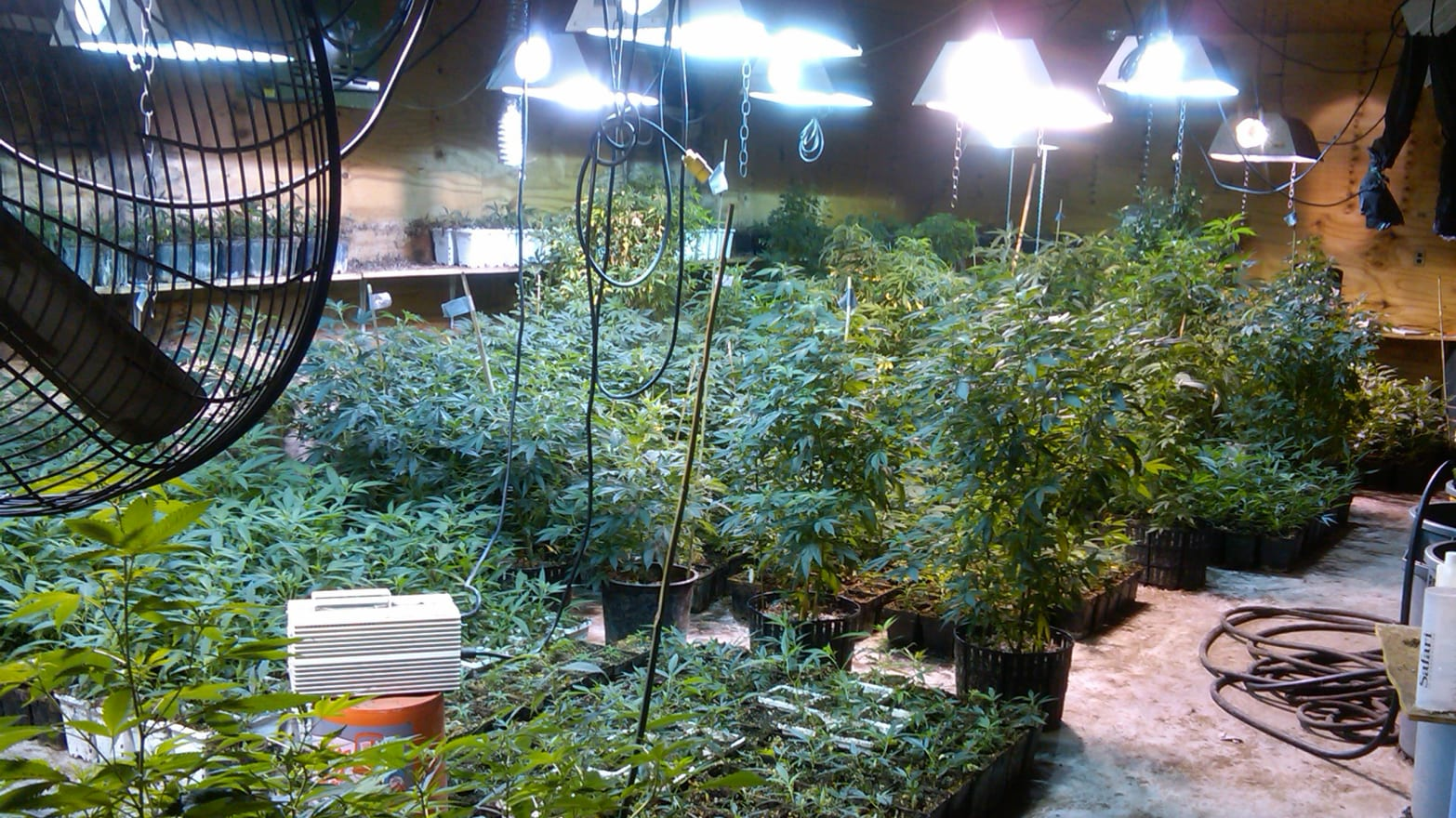 Weeds' Come to Life? Scarsdale Mom Arrested in Massive Pot Bust