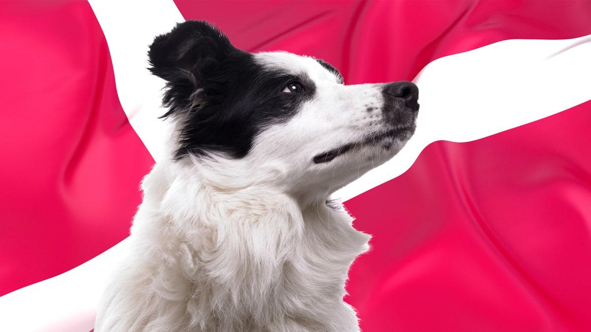 Denmark's Bestiality Problem: It's Legal