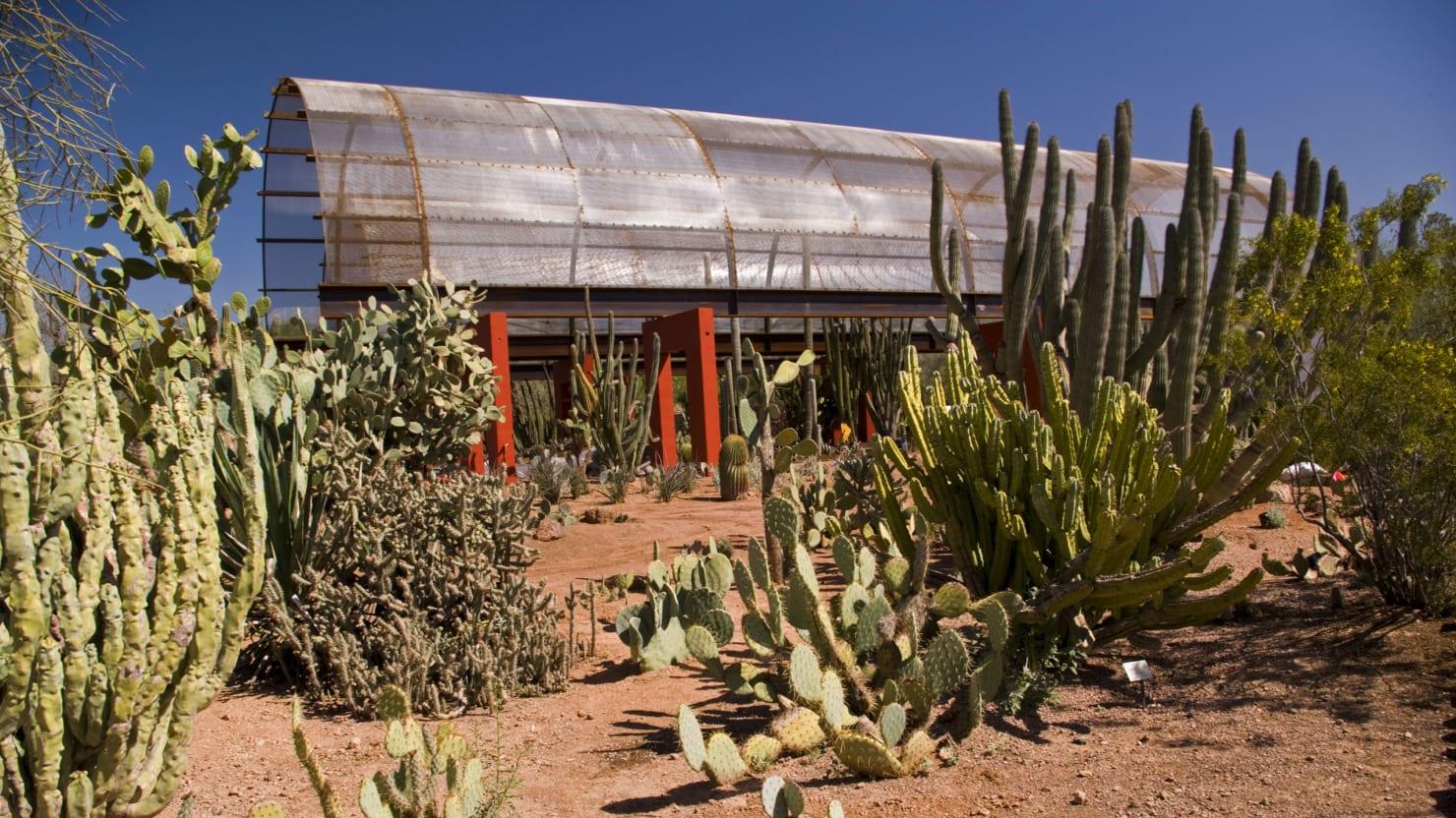 emily riddellgetty - Phoenix Desert Botanical Garden
