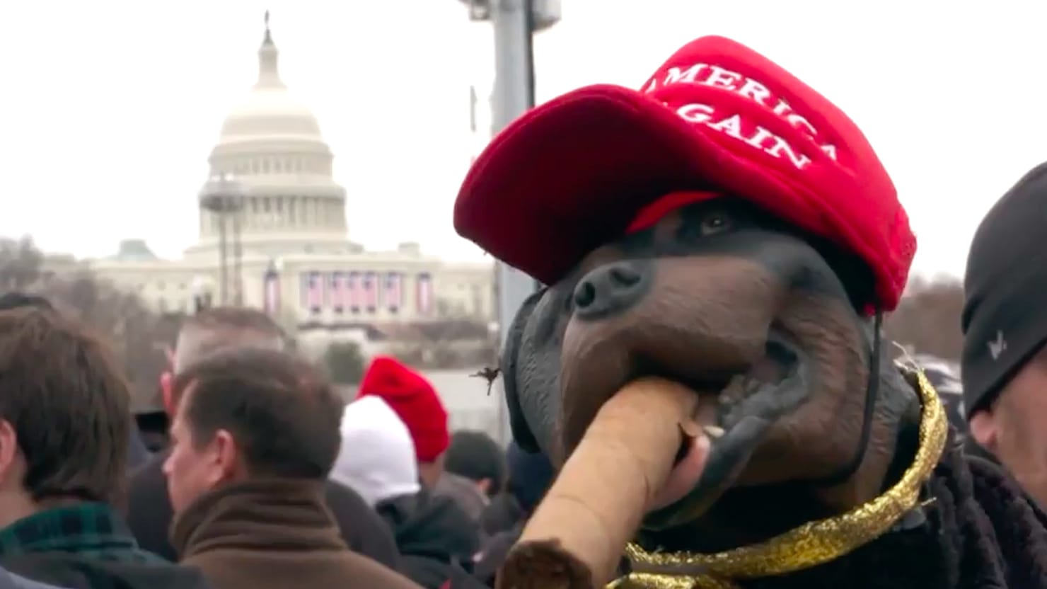 triumph the insult comic dog poops all over trump's inauguration