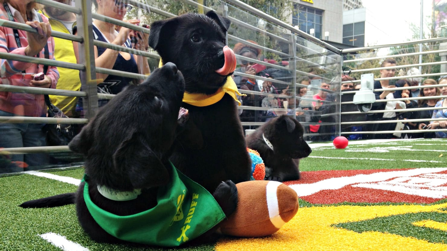 How to Watch Live: Puppy Bowl and Kitten Bowl 2017
