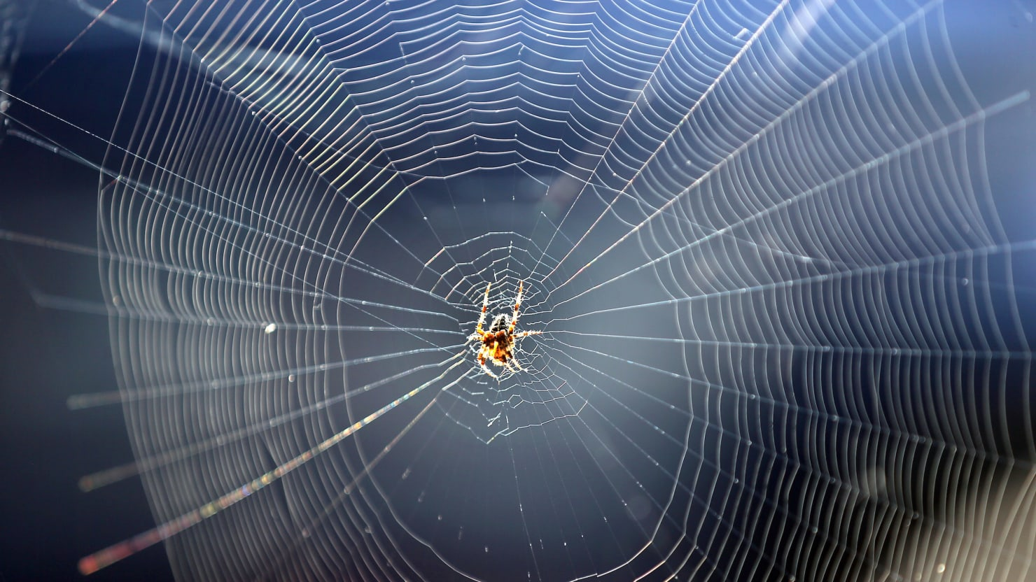 The Man-Made Spider Webs Created By Scientists