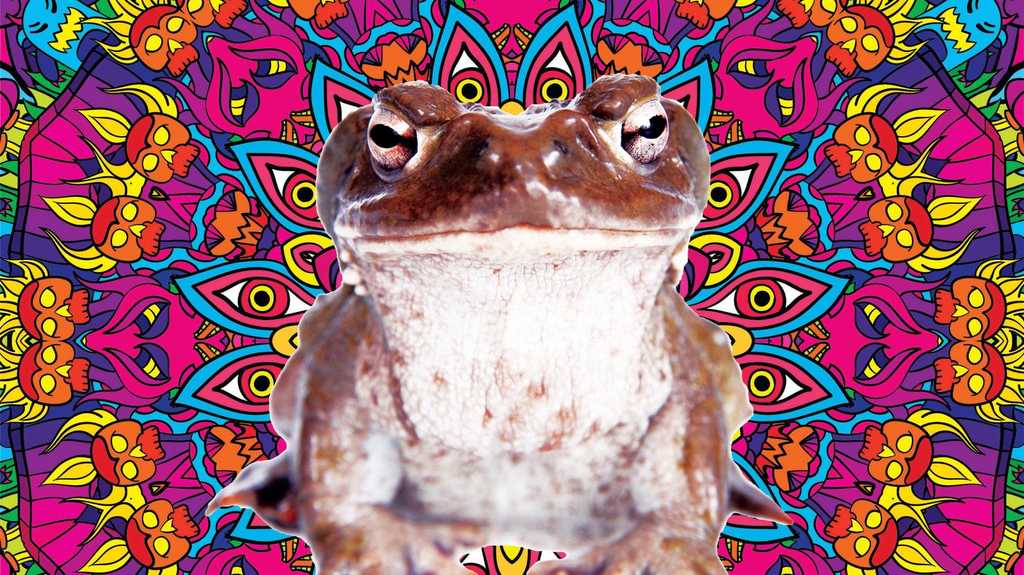 Toad Venom: Weird Trip or Cancer Cure?