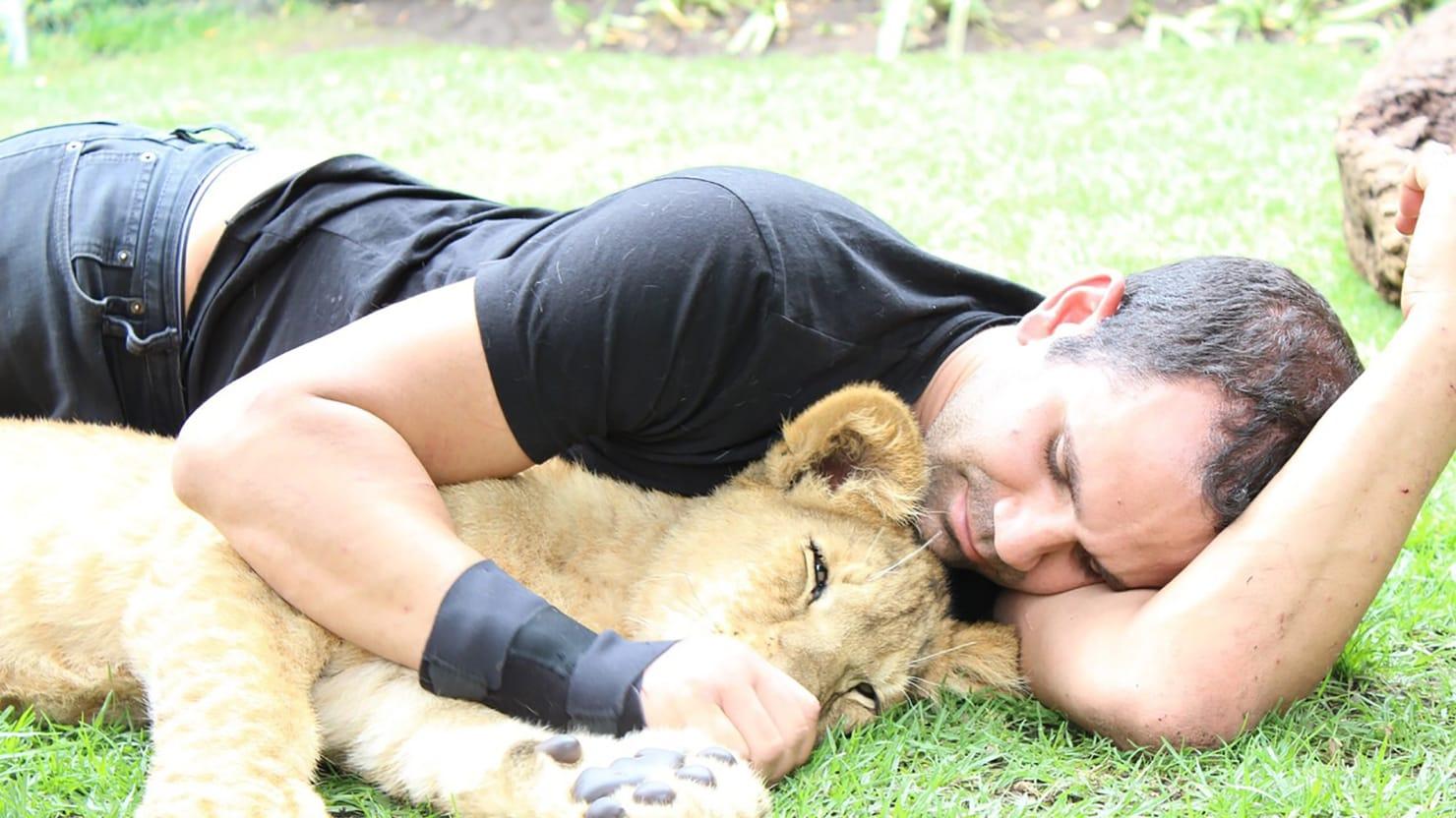 hollywood s favorite sham petting zoo