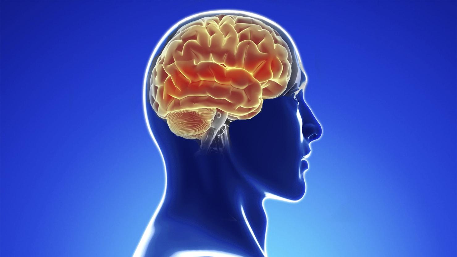 Pioneering Neuroscientists Breach the Blood-Brain Barrier