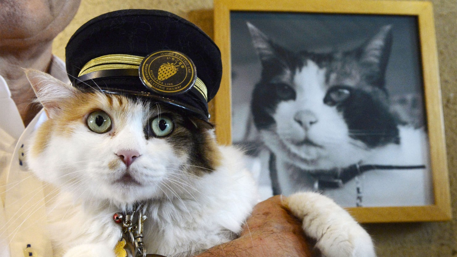Cat Is Japan   s New Railway Stationmaster