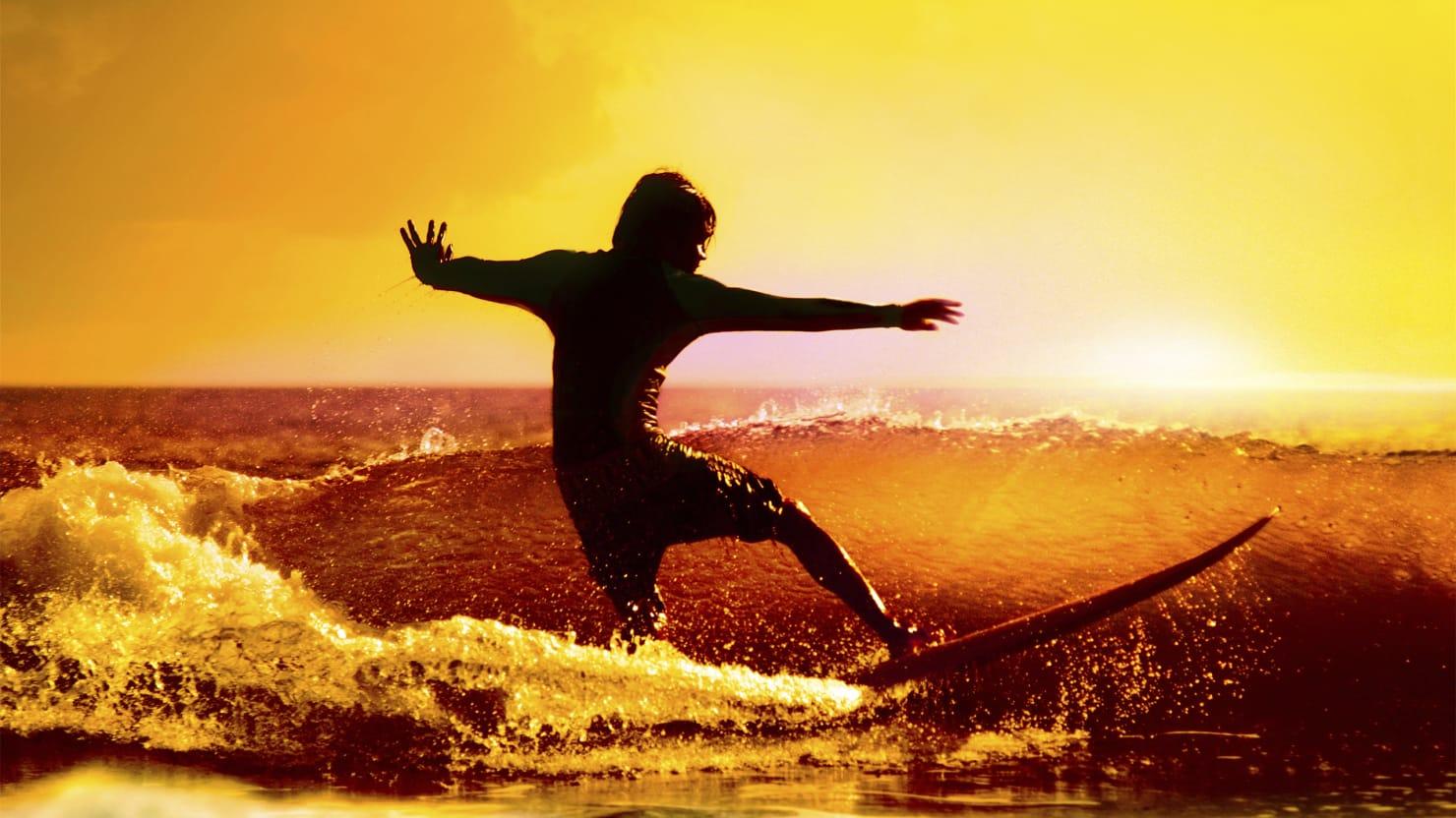 surfers u2019 paradise seized by killer sharks