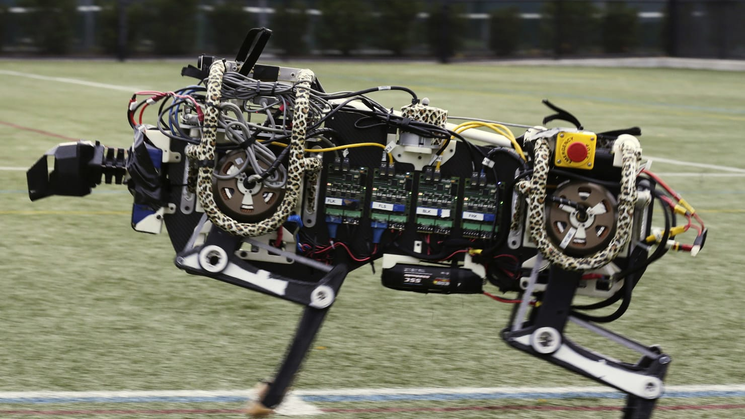 Meet Our Animal Robot Overlords