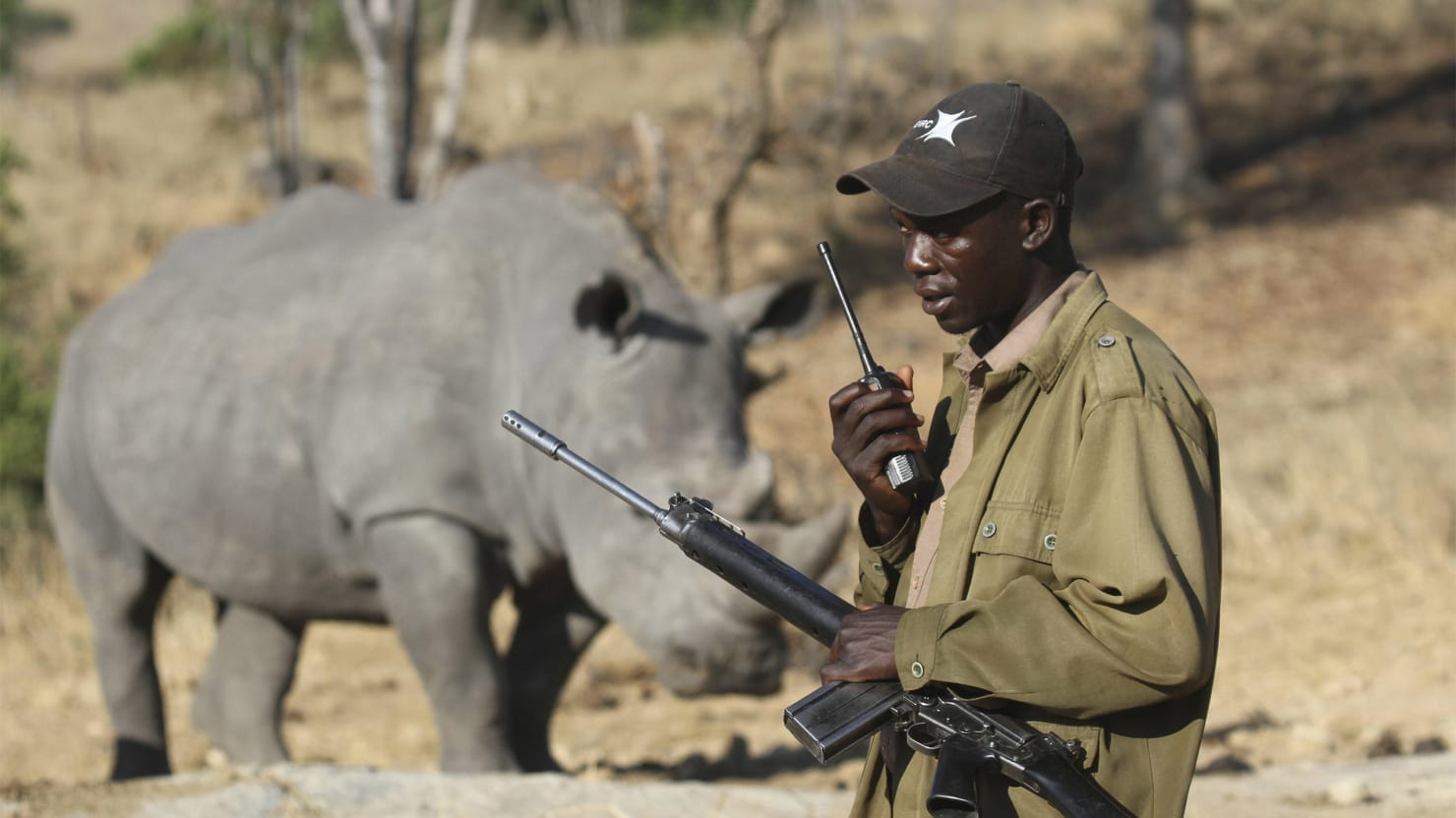 Ebola Could Deal a Death Blow to Africa's Wildlife