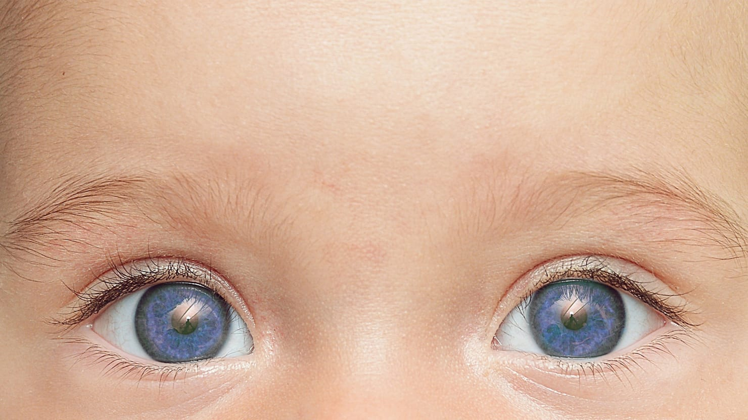 Want Blue Eyes With That Baby?: The Strange New World of Human Reproduction
