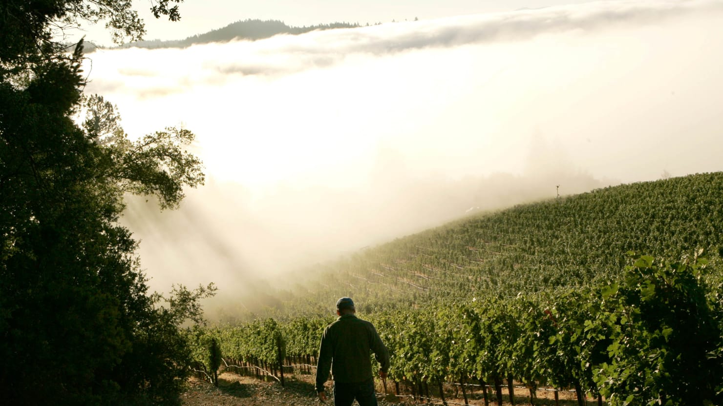 Napa's Earthquake Is Not The Only Thing Shaking The Vineyards