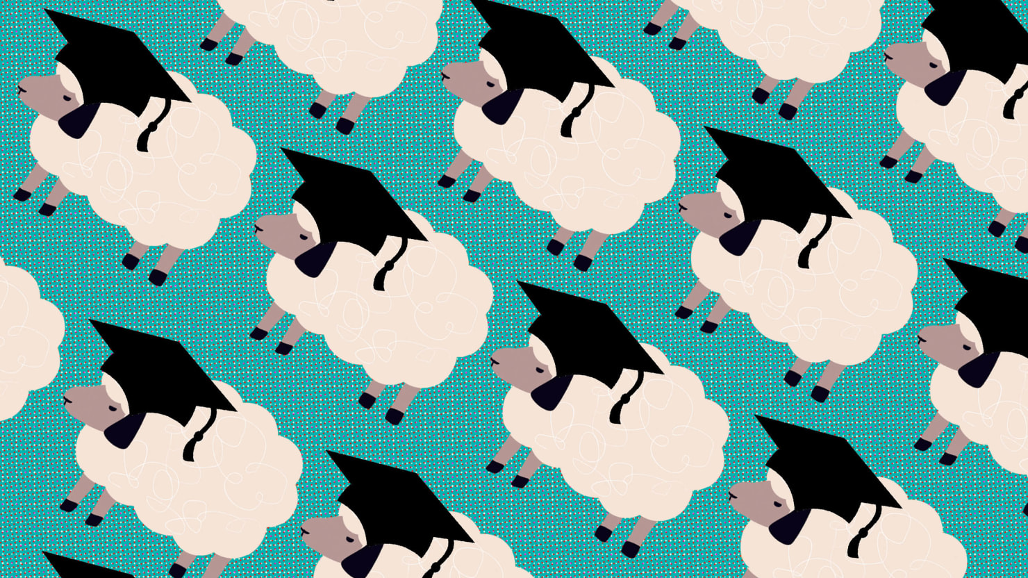 Kết quả hình ảnh cho excellent sheep