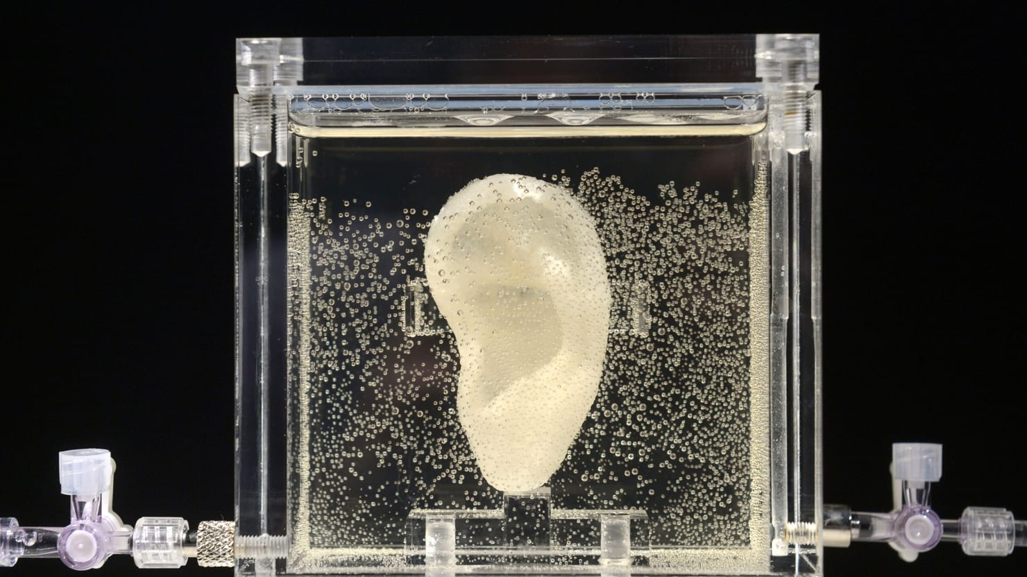 This Artist Reproduced van Gogh's Ear…and It's Alive!