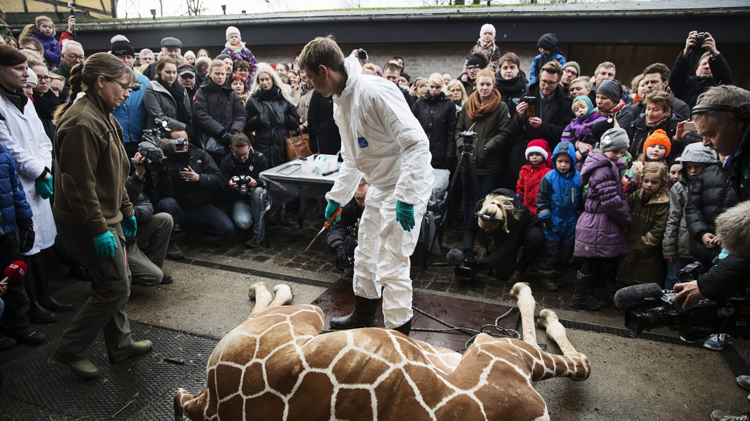 At the Copenhagen Zoo, Humans Can Be Animals
