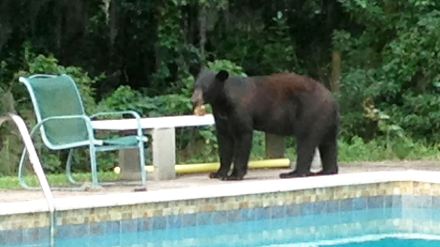 World Tech Auto >> In Florida, Sprawling Humans Confront the Bears Who Lived