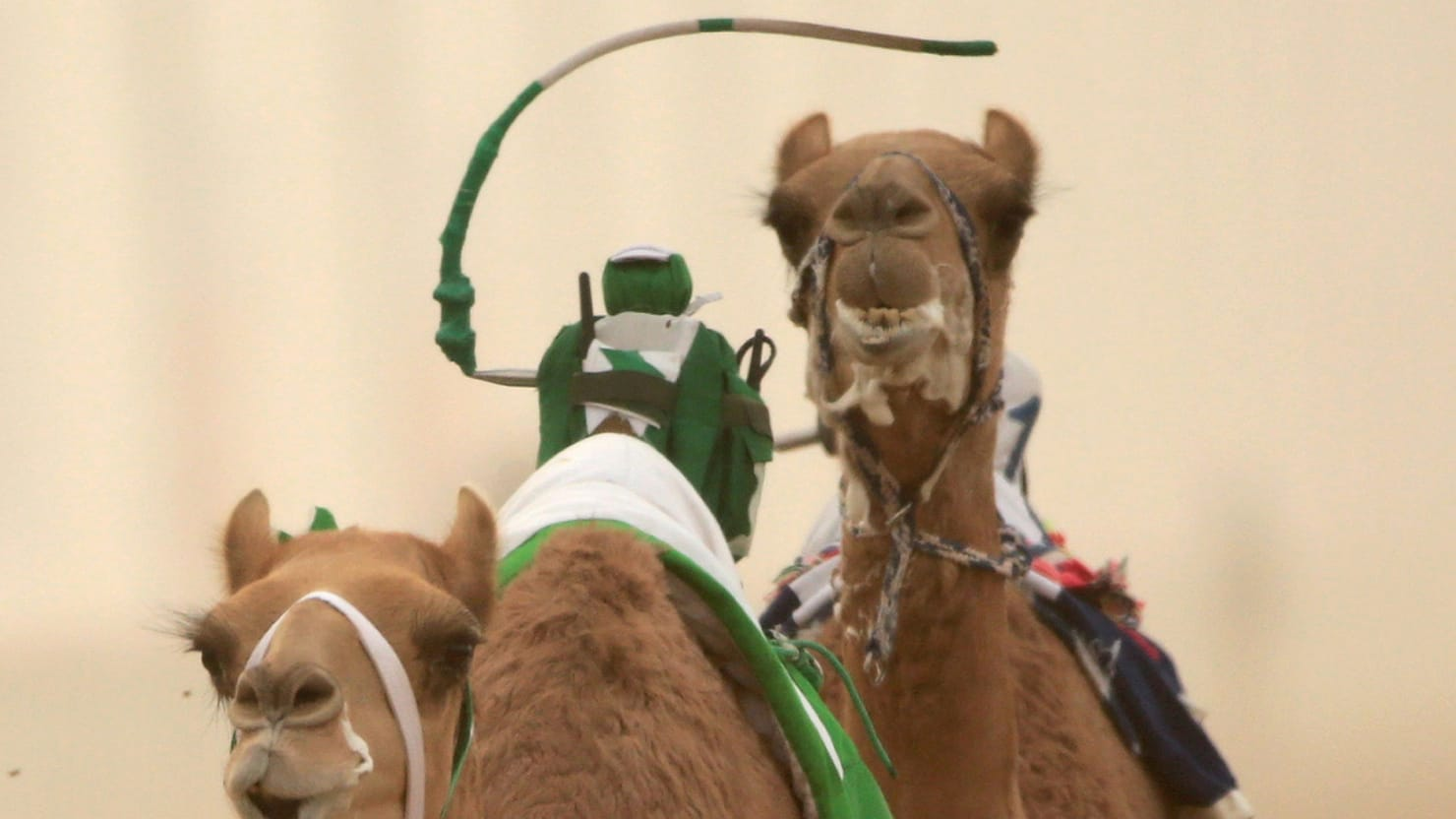 Dubais camel races embrace robot jockeys christopher furlonggetty thecheapjerseys Images