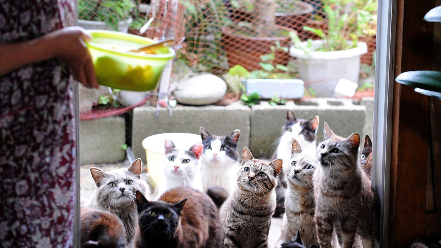 Cats Rule on Japan's Tashirojima Island