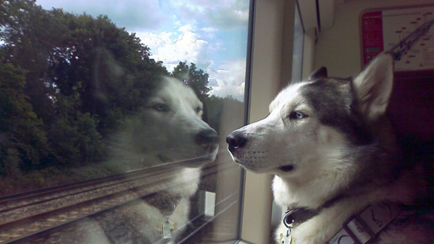 Dog Owners Aren't Booking Train Travel Yet