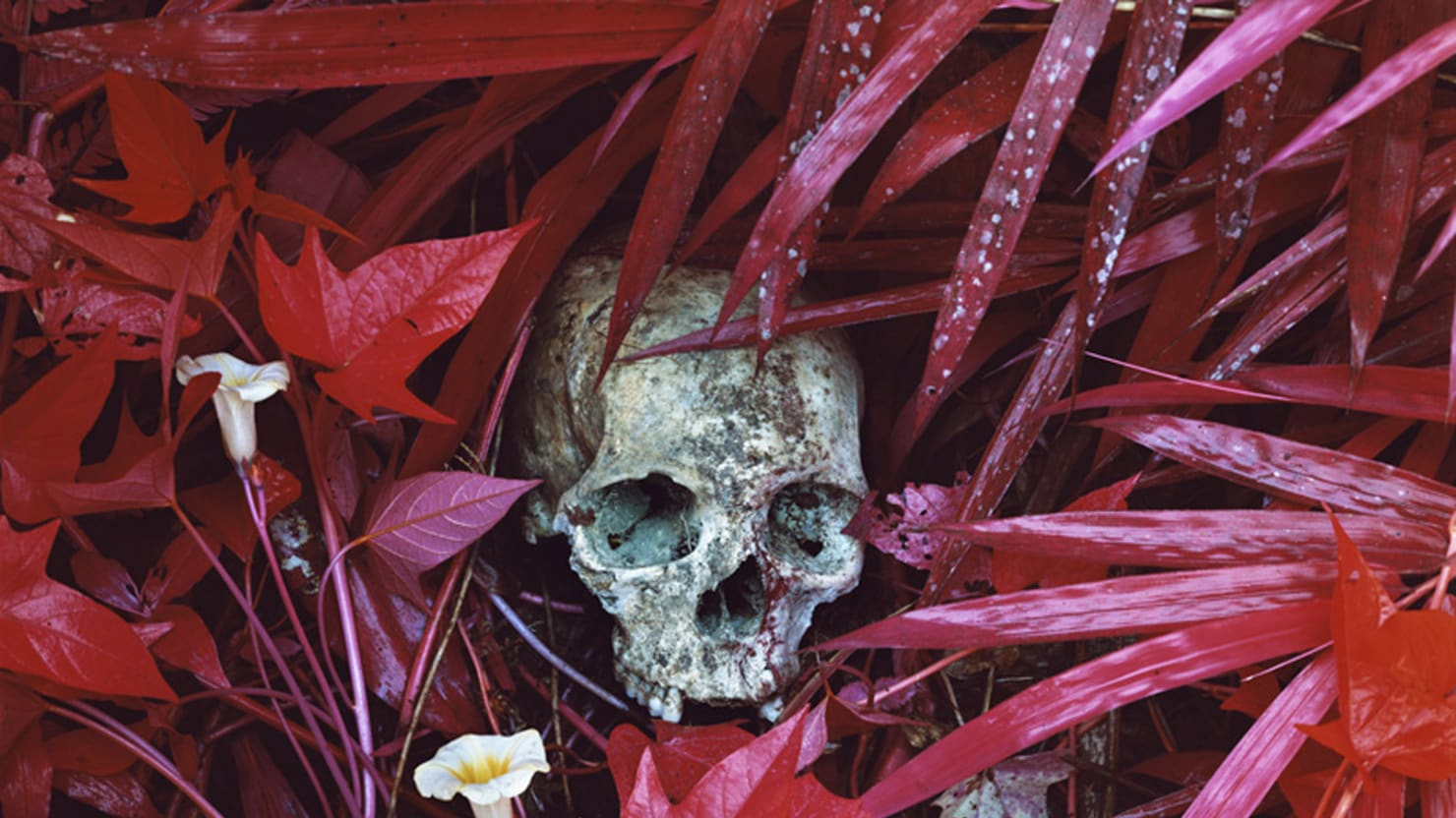 Seeing War Vividly: Richard Mosse Stars at the Venice Biennale