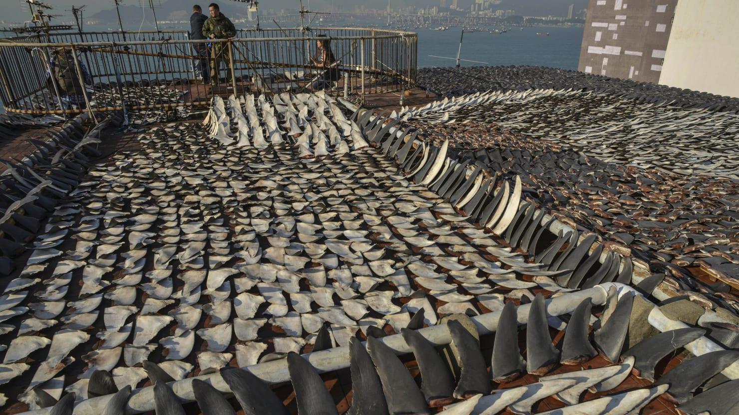 100 Million Sharks Killed Annually The Daily Beast