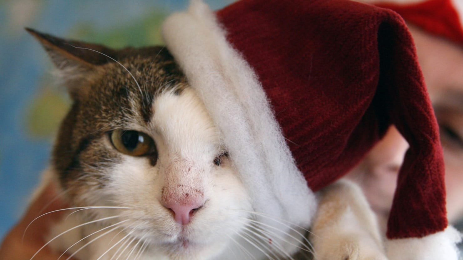 Christmas Cats s