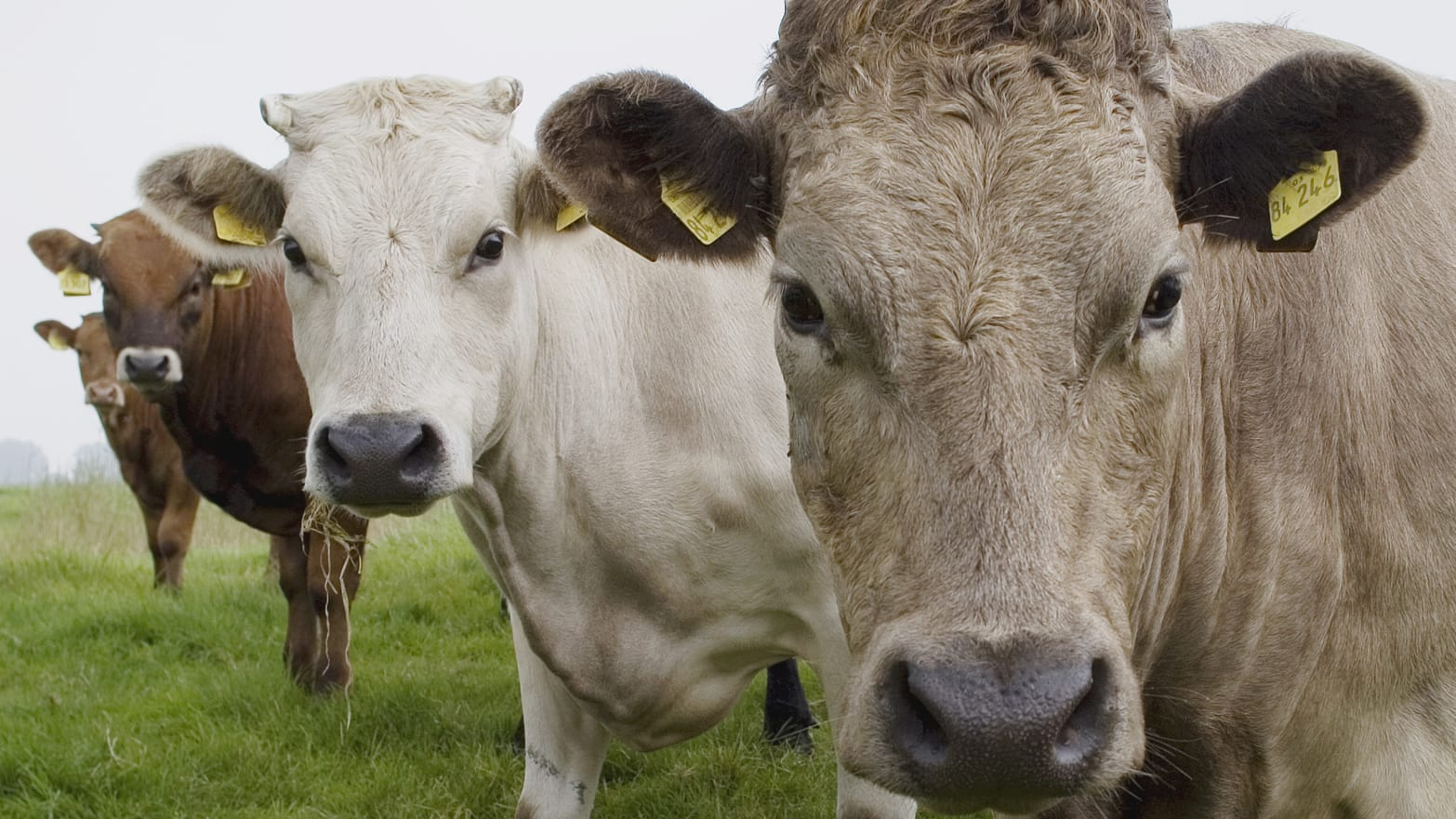 Why Cattle Branding Is Still a Thing