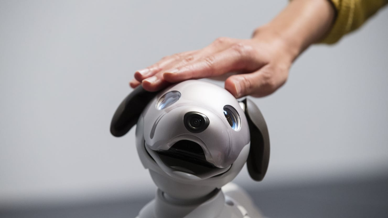 In the Future, We'll Love Our Robot Pets, But Will They Love Us Back?