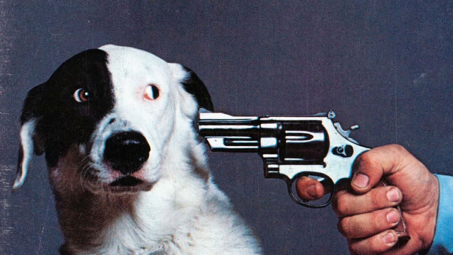Image result for By this magazine or we'll shoot this dog""