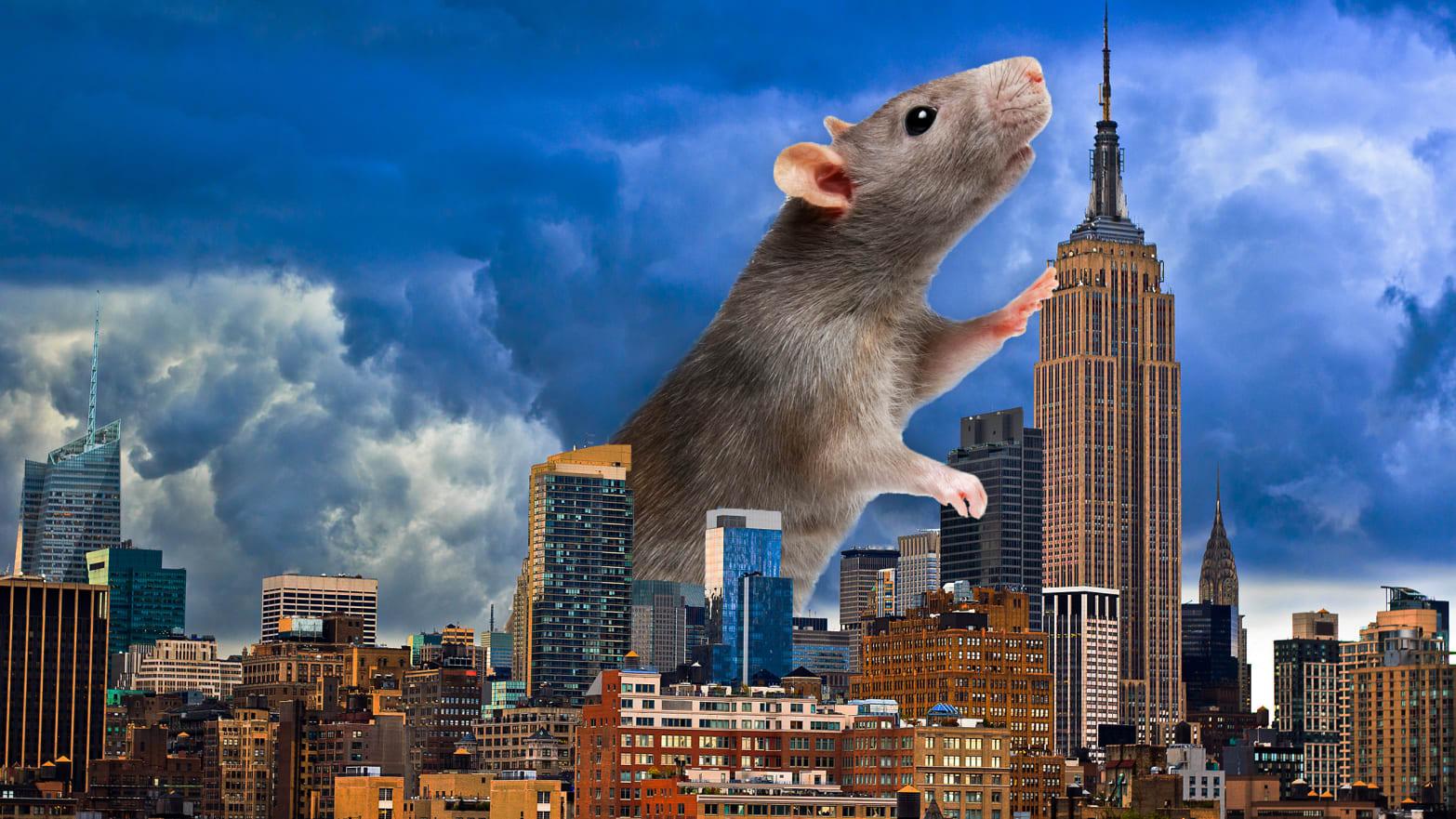Image result for giant rat
