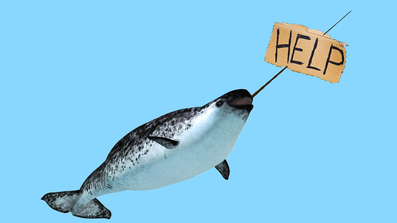 narwhal holding help sign on blue background extinct endangered species global shipping climate change unicorn whale