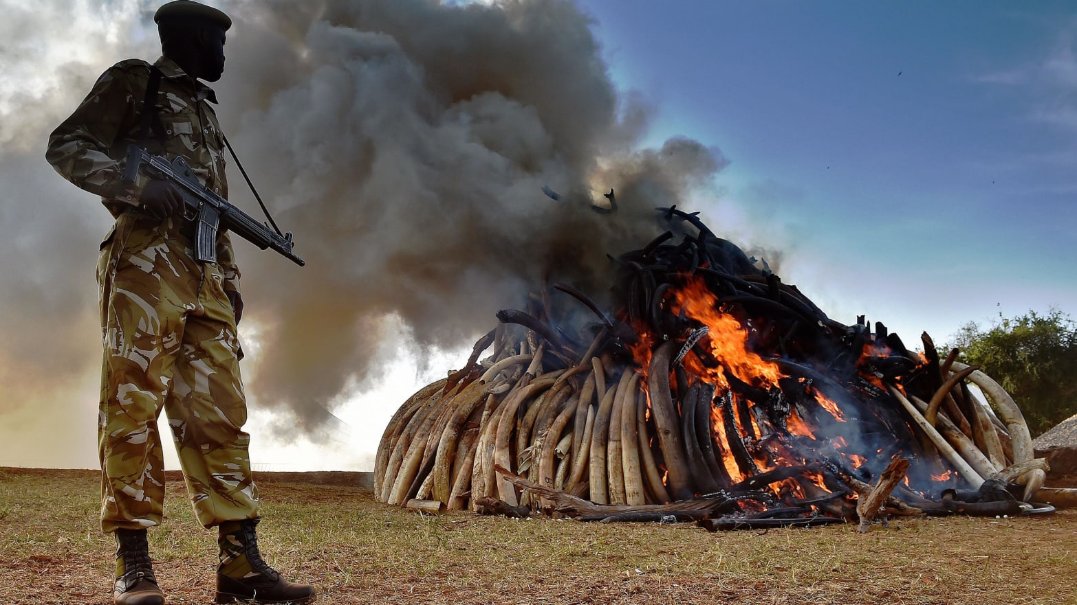 rachel nuwer poached anti poaching hunt hunting elephant ivory tiger tusk pangolin climate change