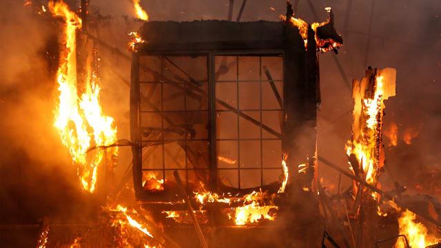California Wildfire Turns High School Into Noah's Ark for Farm Animals