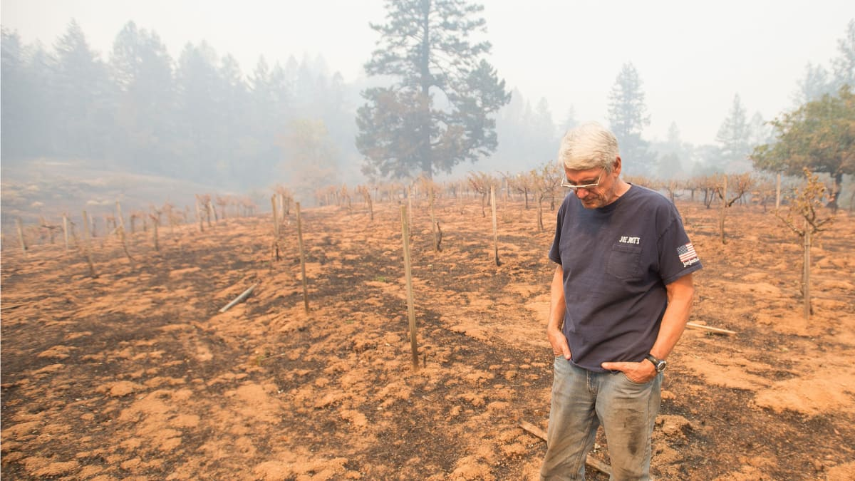 How Fire Has Shaped California's Wine Industry