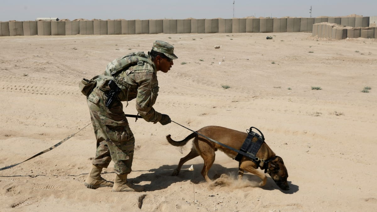 Pentagon Report: Army Mistreated Dogs That Served in Combat
