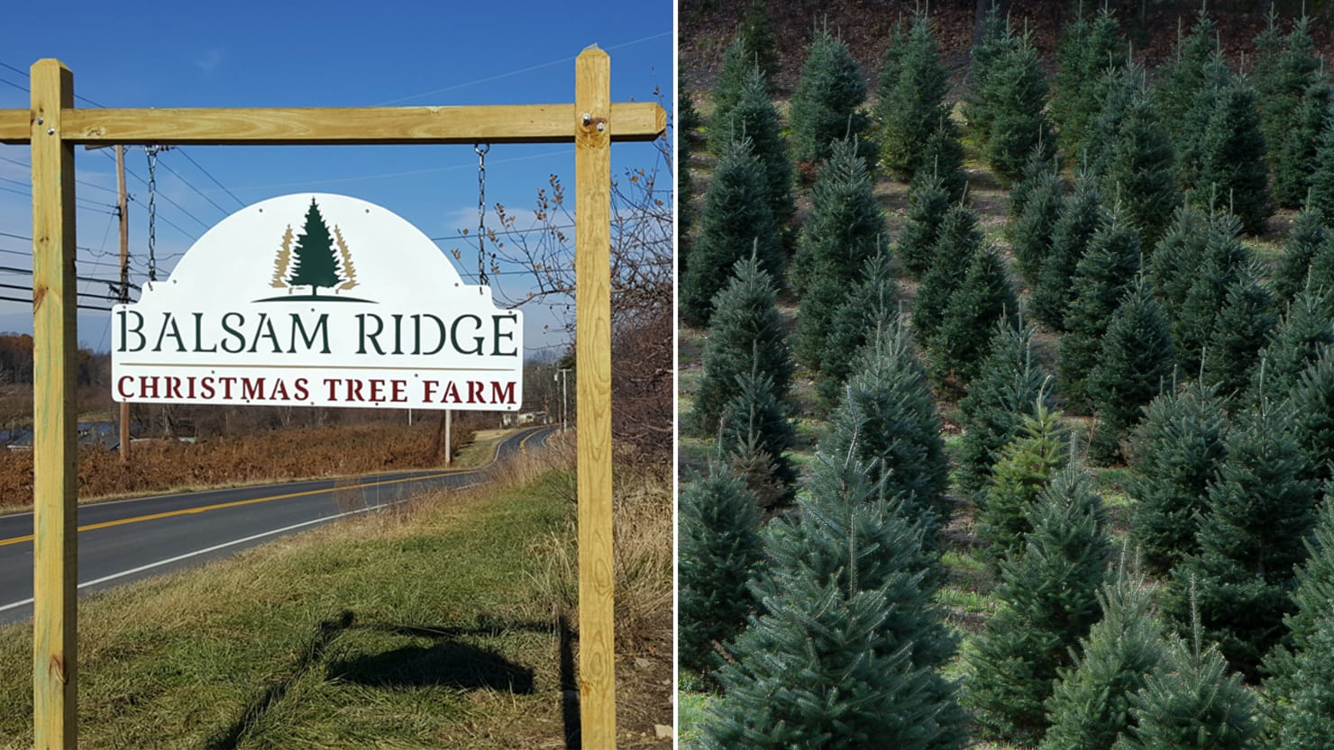 a day in the life of a christmas tree farm