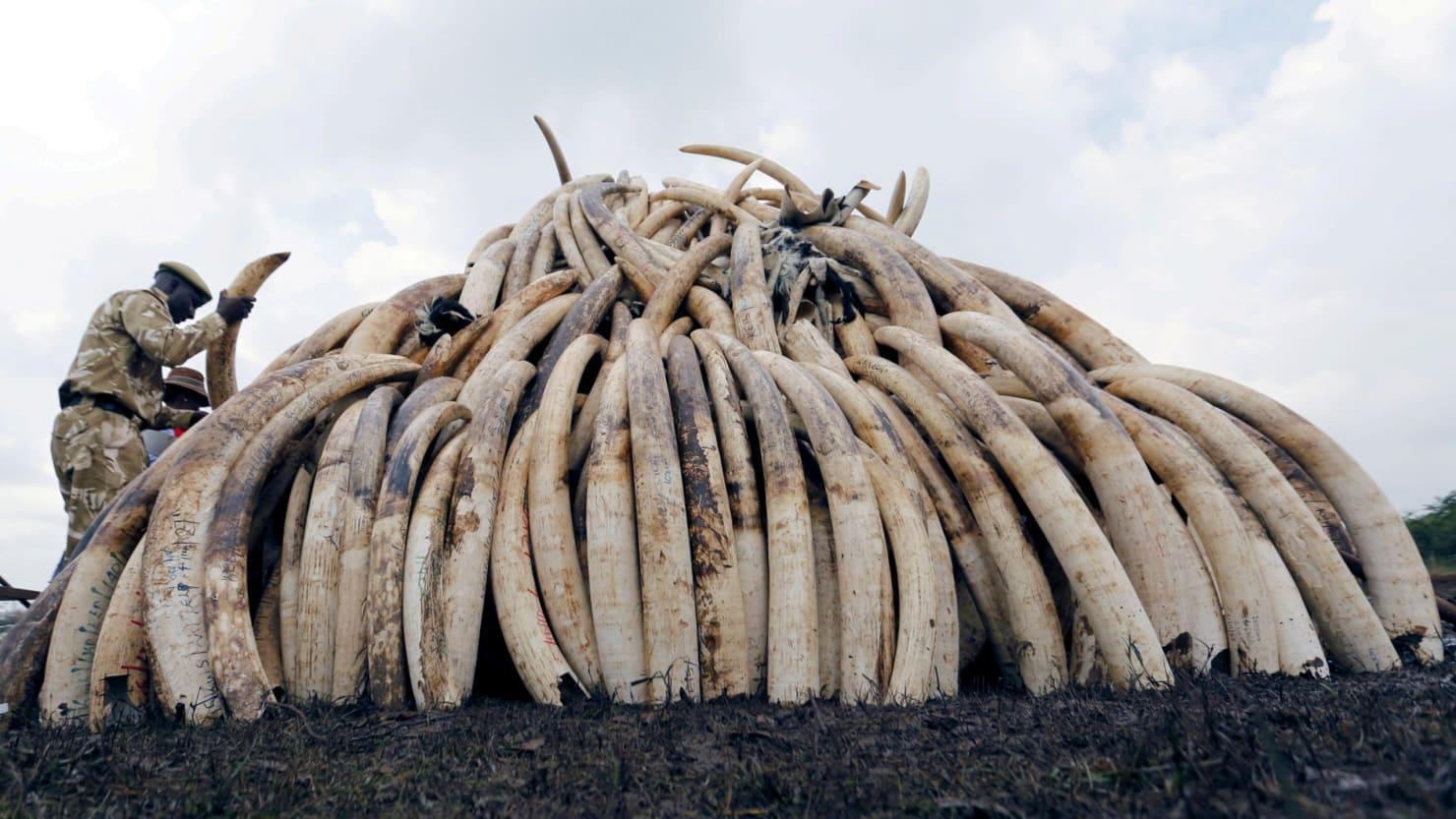 Image result for Top ivory investigator murdered in Kenya