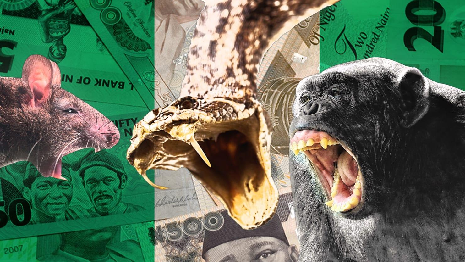 how animals  u2018stole u2019  300k from officials in nigeria